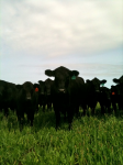 inquisitive-cattle